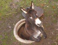 DonkeyHole.jpg